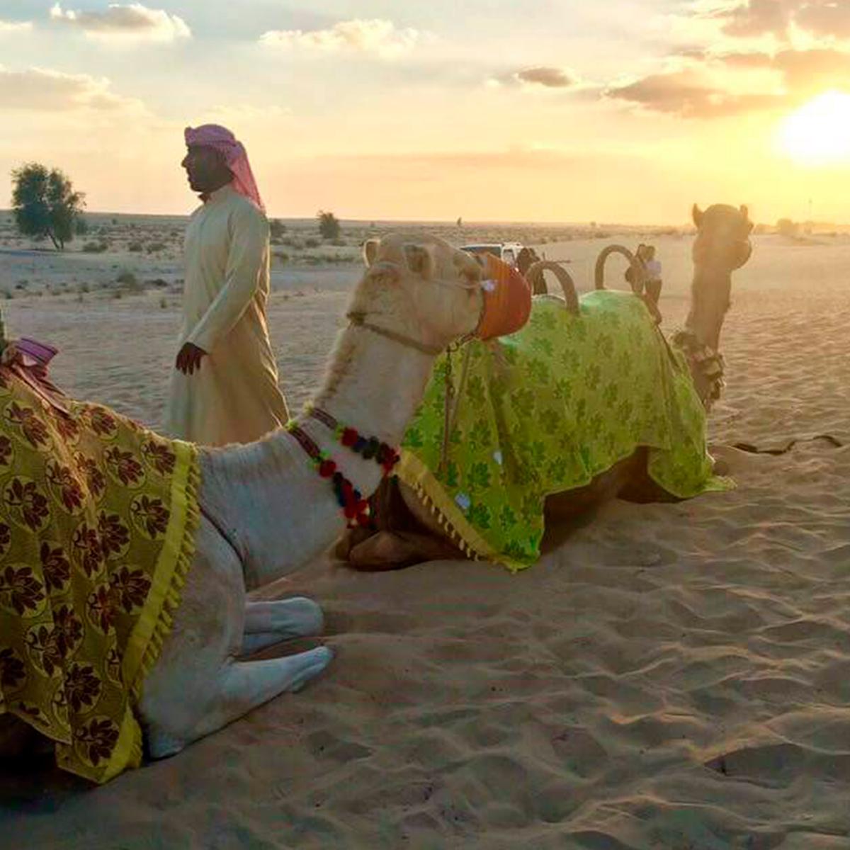 6_camel